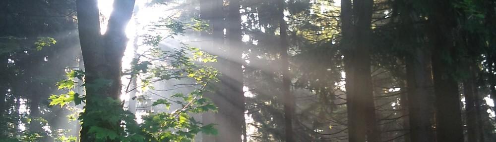 Lichtblicke finden